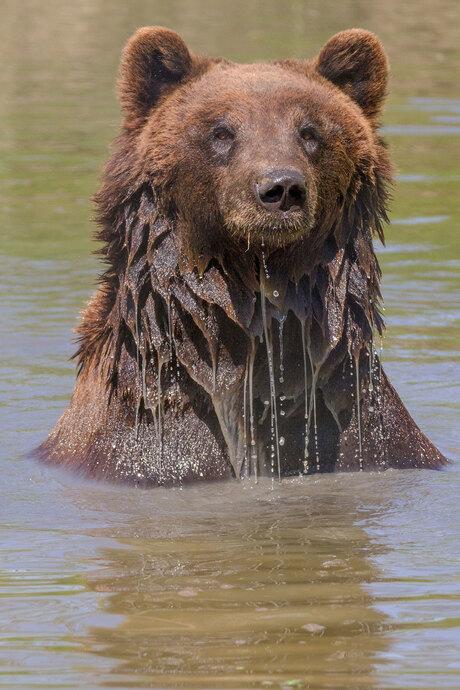 beer in het water