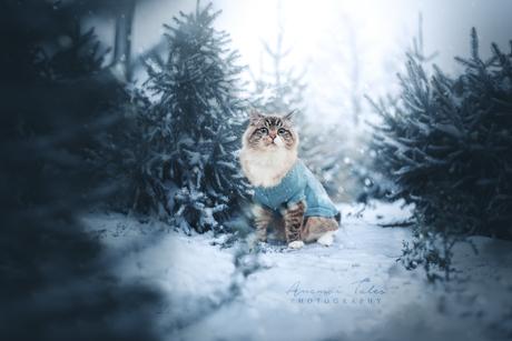 Gimli in winter wonderland