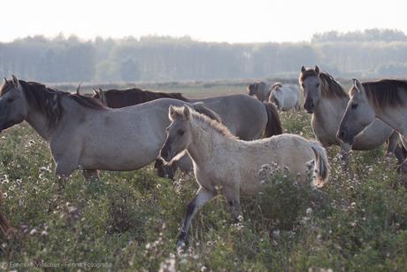 Paarden in een middagzonnetje