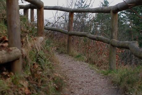 Around the Forest-2.jpg