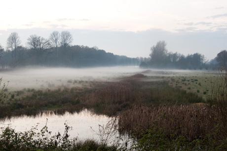 Kruipende mist