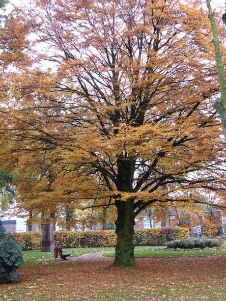prachtige gekleurde boom