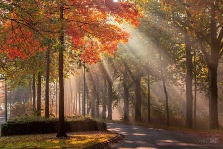 Rode herfstboom met zonnestralen slochterdiep slochteren
