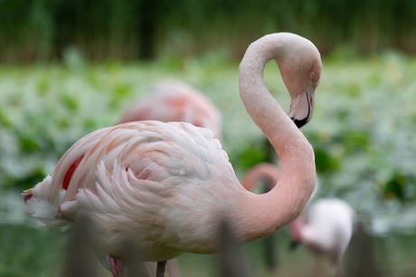 flamingo=aquazoo-4259