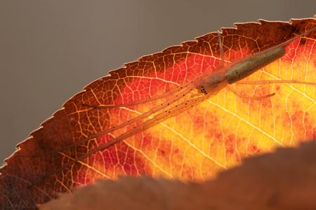 strekspin - - - foto door JeanneW op 09-11-2018 - deze foto bevat: macro, natuur, spin