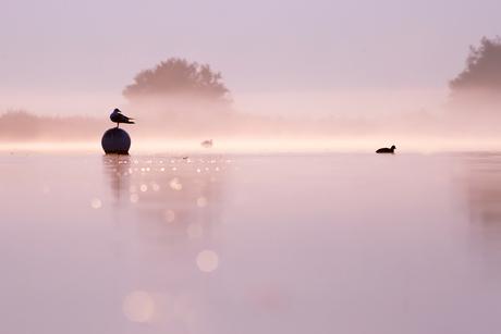 Meeuw & Mist