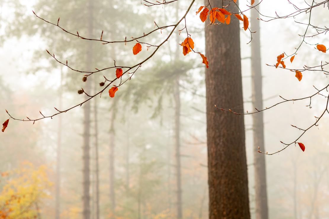 De laatste blaadjes - - - foto door burrybrink op 11-12-2019 - deze foto bevat: natuur, herfst, winter, landschap, mist, bos, bomen