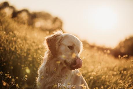 Golden golden boy