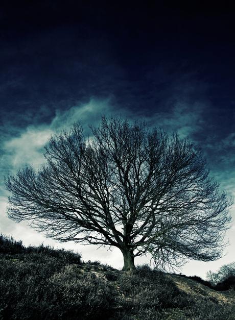 Acid tree
