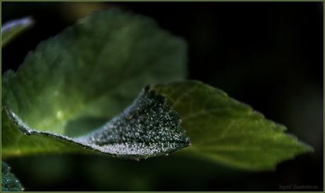 kristalletjes op een blad..