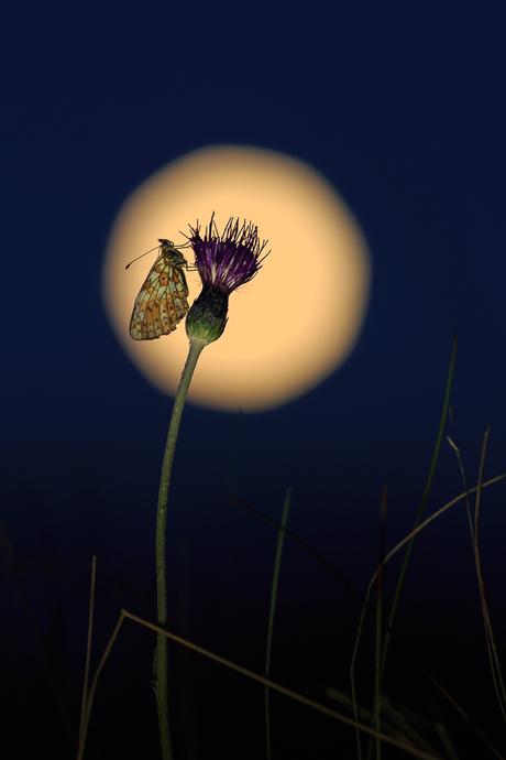 Zilveren maan bij volle maan.