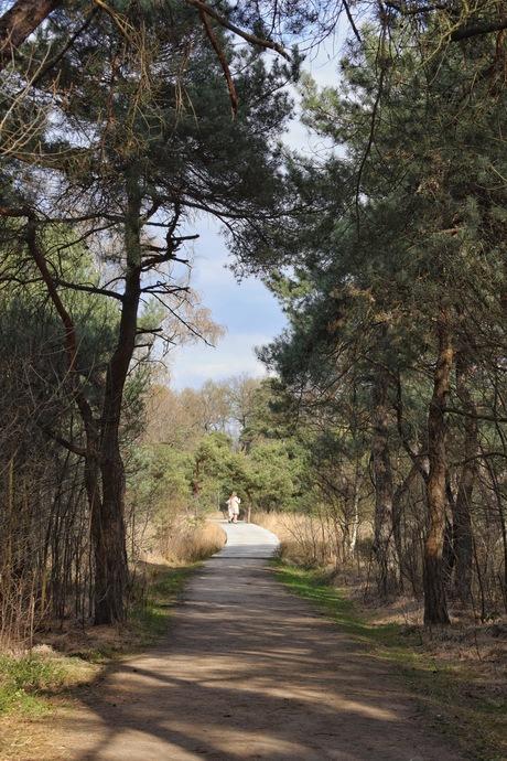 Bewolking boven het bos