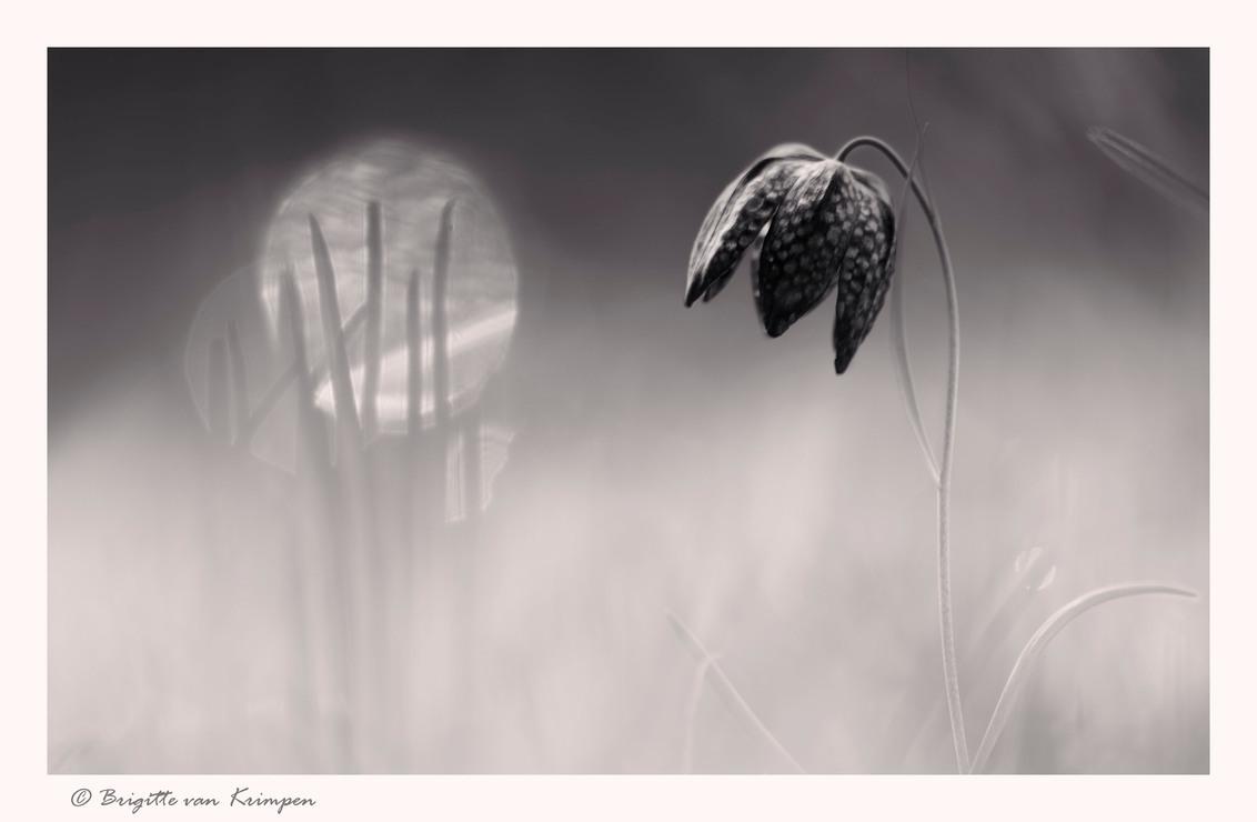 """Black beauty - Deze is speciaal voor de macro """"kunst"""" liefhebbers. Ik wilde even laten zien, dat ook macro fotografie ontzettend mooi kan zijn in zwart-wit (althan - foto door Puck101259 op 24-06-2016 - deze foto bevat: gras, macro, wit, lente, natuur, bruin, druppel, licht, zwart, sfeer, dauw, dof, bokeh, brigitte, zwart wit"""