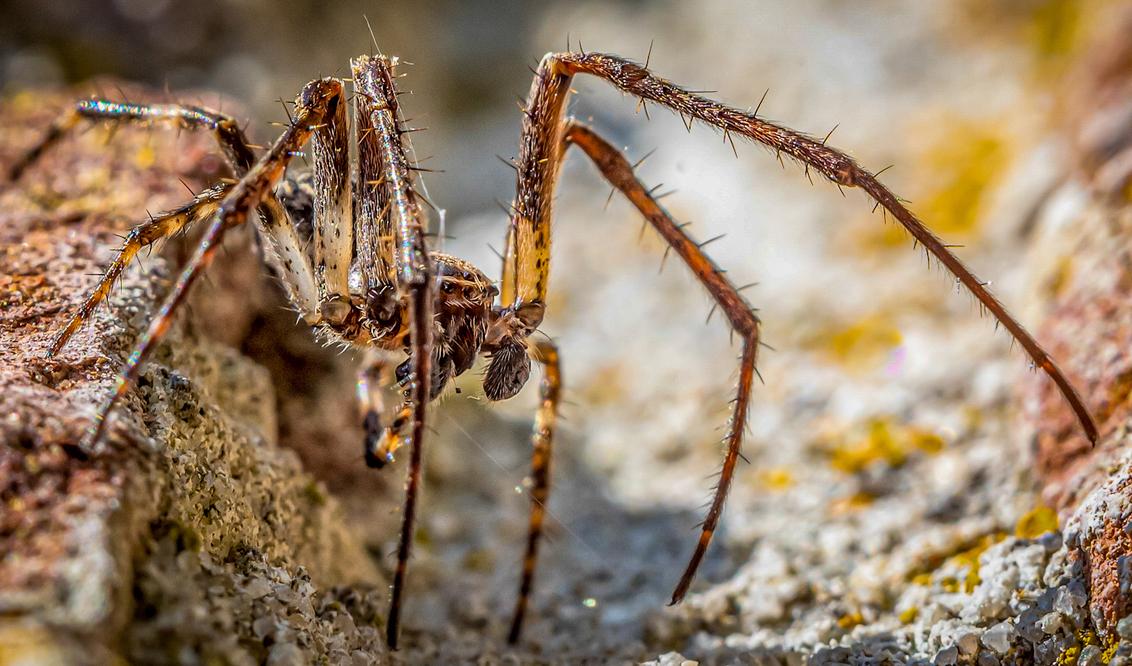 Spun - - - foto door lommer op 20-01-2021 - deze foto bevat: spin, insect