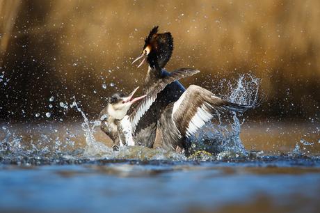 Splash Clash
