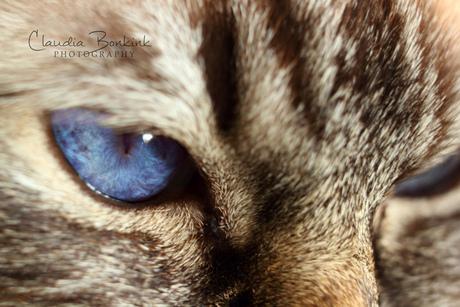 Beautiful miss blue eyes