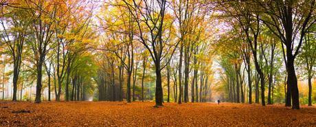 Herfst I