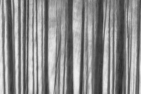 Moving trees - Bewogen Bomen. West Highland Way, Schotland - foto door willemku_zoom op 29-10-2019 - deze foto bevat: natuur, landschap, bomen