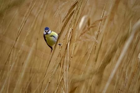 Hanging in - . - foto door Time---traveler op 13-04-2021 - deze foto bevat: vogel, fabriek, ecoregio, water, hout, gras, bek, grass familie, grasland, boom