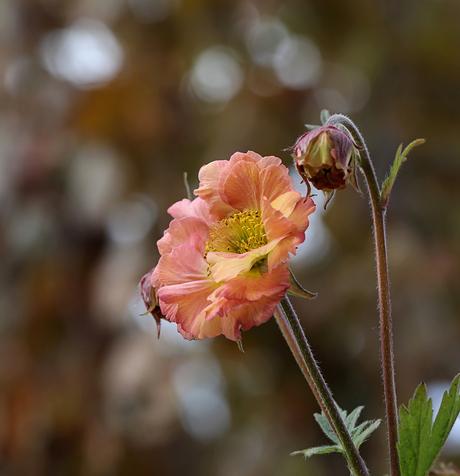 Flower off Spring