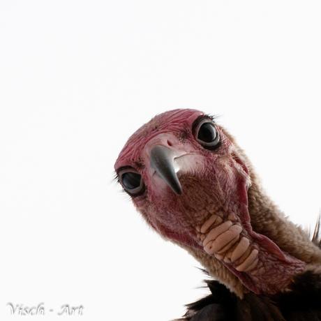 De lelijkste vogel tot nu toe