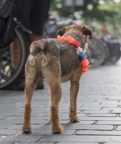 Het hondje met de hollandse boa
