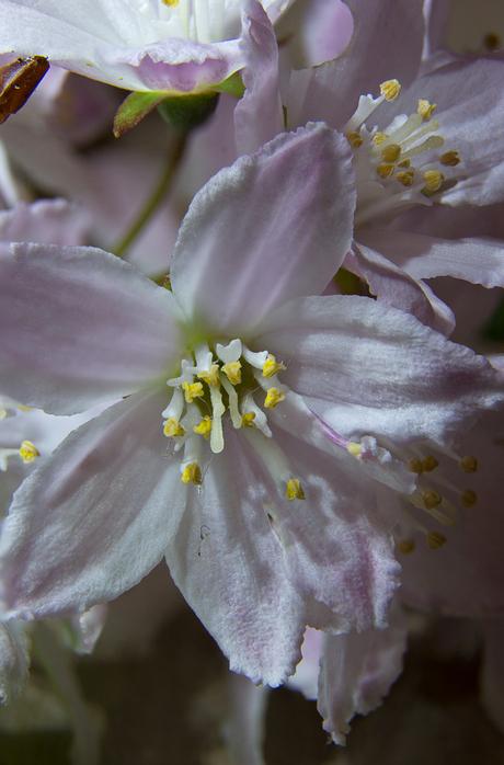 Bloem close up