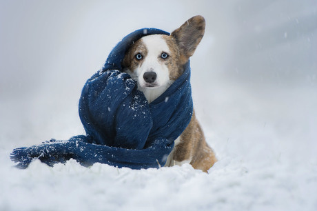 Cold outside.....