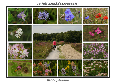 Brinkdorpenroute 2 Wilde planten