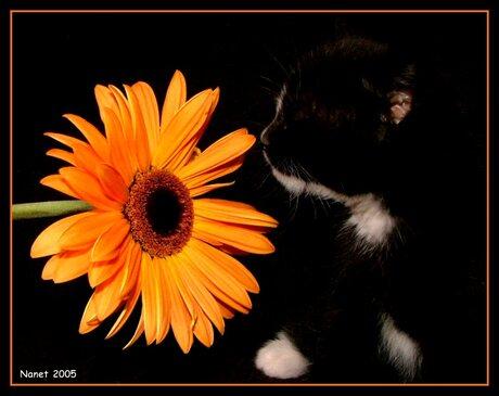 Over de bloemetjes en de....