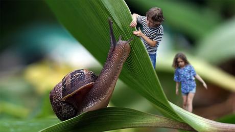 Verstoppertje spelen met slak