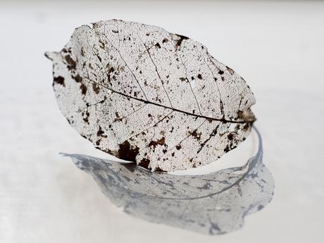Old leaf