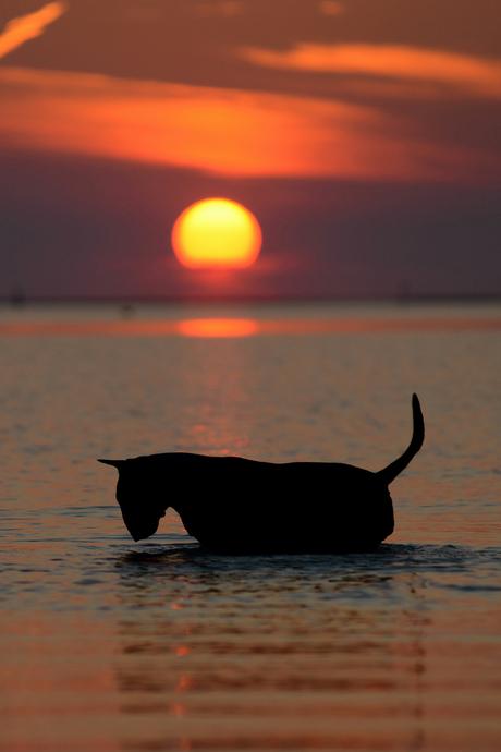 Sunset Bullyvard