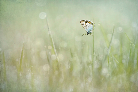 Heideblauwtje - Even wat spelen met twee foto's over elkaar... - foto door NelTalen op 12-08-2016 - deze foto bevat: bewerking, sprookje, heideblauwtje, bokeh