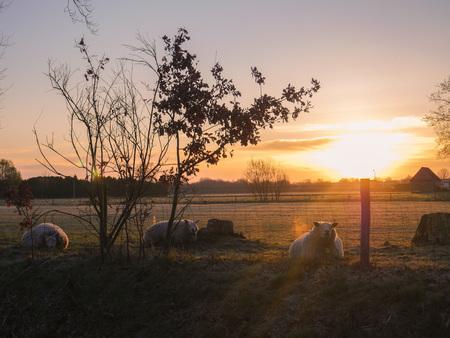 golden hour - golden hour In de ochtend met een beetje een foggy feeling is mijn favoriete moment.  - foto door snippephotography op 12-04-2021 - locatie: Hoogeveen, Nederland - deze foto bevat: lucht, wolk, fabriek, atmosfeer, ecoregio, natuurlijk landschap, natuurlijke omgeving, hout, nagloeien, afdeling