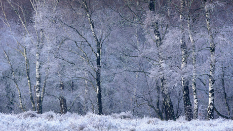 Veil of Frost