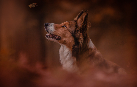 How beautifully leaves grow old. How full of light and color .... just like my stunning boy Jazz, he has a place in my hart no one could ever have.