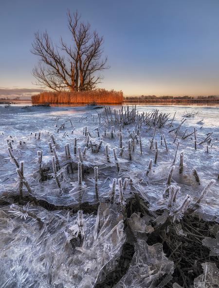 Biesbosch - kasefiltersbenelux De start van de dag in NP de Biesbosch. Fujifilm GFX100, GF23MM f/4.0, Kase K9 met H-GND-0.75 & CPL  #kasefilters #kasefilters - foto door mvbalkom op 09-01-2021 - deze foto bevat: zon, natuur, licht, winter, ijs, landschap, nederland, vorst, biesbosch