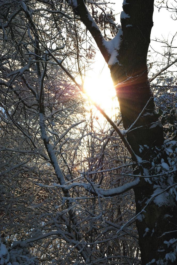 een ochtendzonnetje in de sneeuw - Vanochtend genomen in het mooie drentse land. - foto door svandorst op 03-01-2010 - deze foto bevat: hoogeveen, tjalmapark