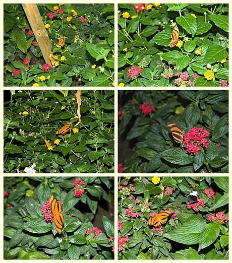 Bloeiende planten met hier en daar de oranje tijgervlinder.