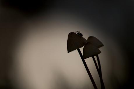 Itsie bitsie spider....