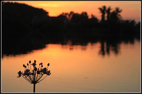Sundown over the fishpond