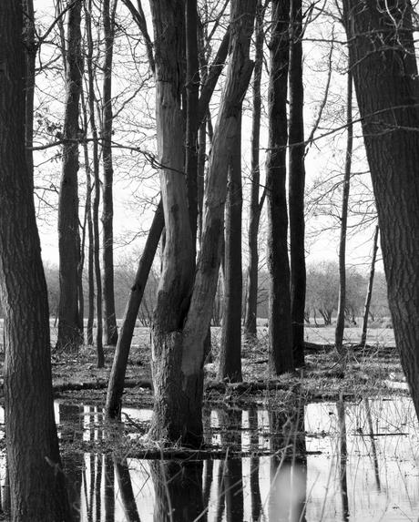 spiegeling vang boomstammen