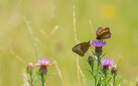 Hallo - Zo mooi, een blik in het veld. - foto door Gilles147 op 30-06-2017 - deze foto bevat: groen, bloem, natuur, vlinder, licht, zomer, veld