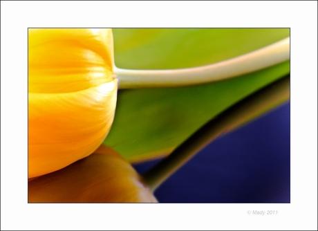 Tulpen creatie(f) 5