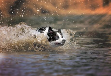 vliegend door het water