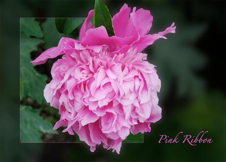 Pink Ribbon 2
