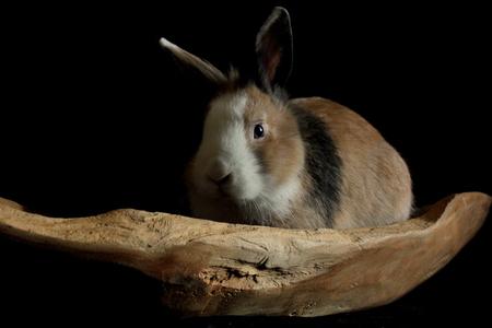 Olaf het konijn - konijn - foto door misskell op 21-01-2015
