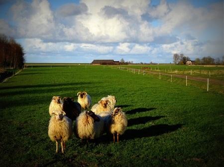 Ze zijn er weer - Het was even weer wennen voor hun en voor mij. Ze konden me nog. - foto door jan.pijper op 14-04-2021 - locatie: Tweehuizerweg, 9909 Spijk, Nederland - deze foto bevat: wolk, lucht, fabriek, ecoregio, gewervelde, mensen in de natuur, natuurlijk landschap, zoogdier, boom, gras