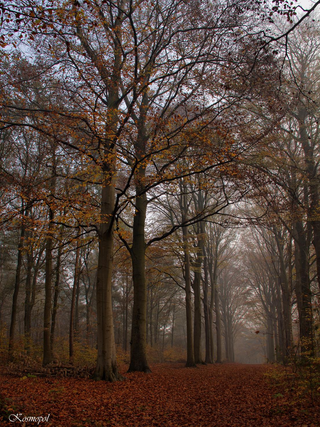 Wandelen in het bos... - Het is herfst... :) - foto door kosmopol op 24-11-2011 - deze foto bevat: herfst, bos, laan, kosmopol